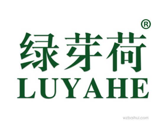 绿芽荷 LUYAHE